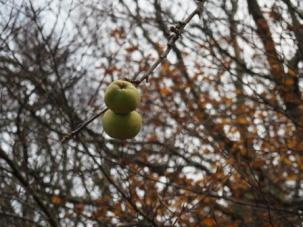 December apples